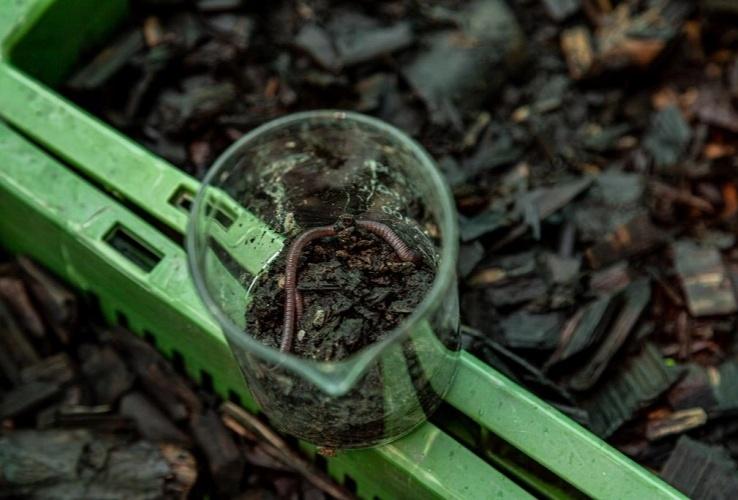 Absolute_Water_Bio-filter-Plant-Vermicast-methodologies
