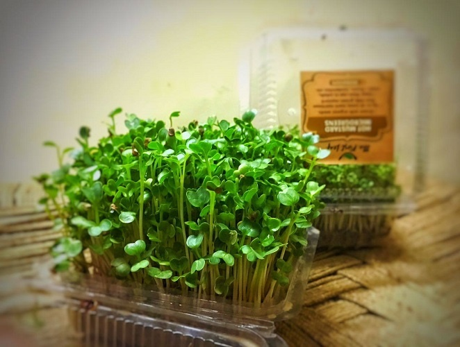 Microgreens - a nutritional power pack