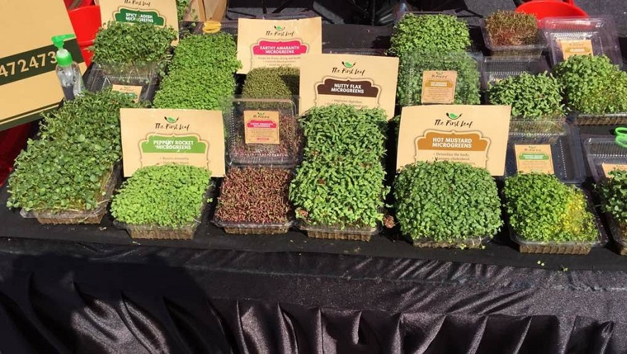 how to Cultivate Microgreens