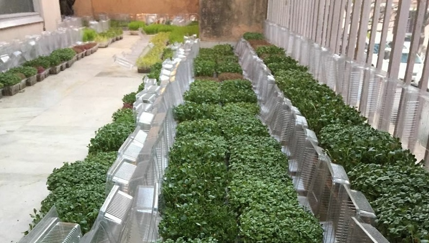 Microgreen demands less room with a mega growth rate