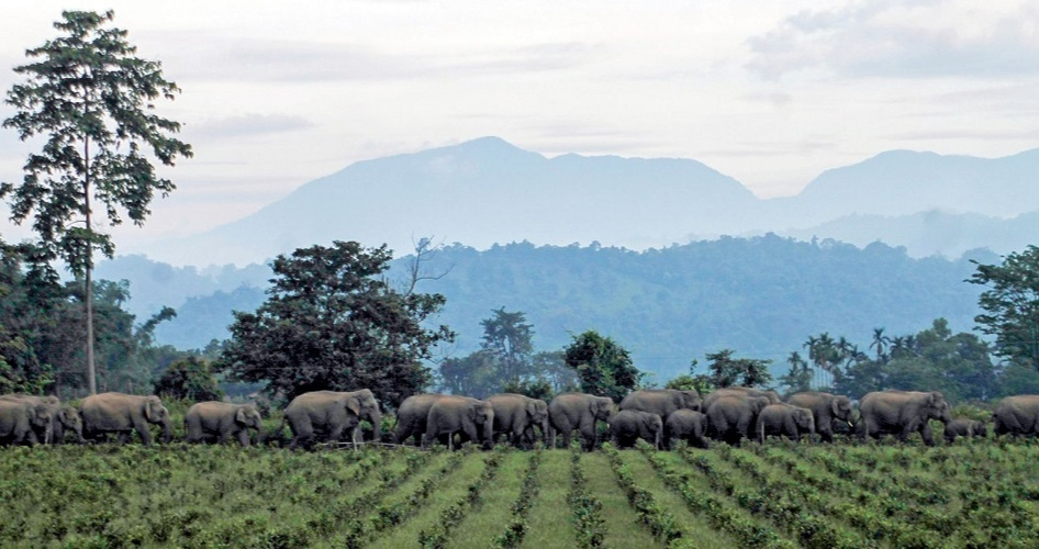 Sanctuary Nature Foundation also created space for the elephants which are there and harvest spaces for the humans for the agroforestry