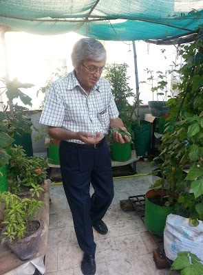 he organically grows about 15-20 types of vegetables