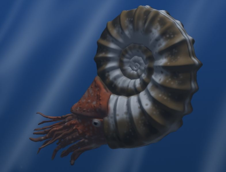 she stopped at one picture and that happened to be the image of an ammonite