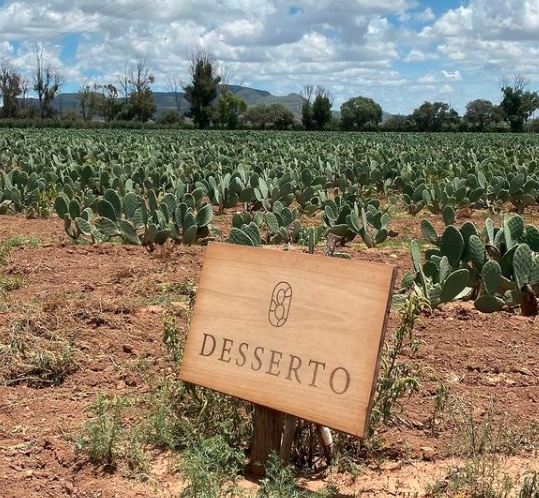 Desserto is a highly sustainable vegan leather made of cactus