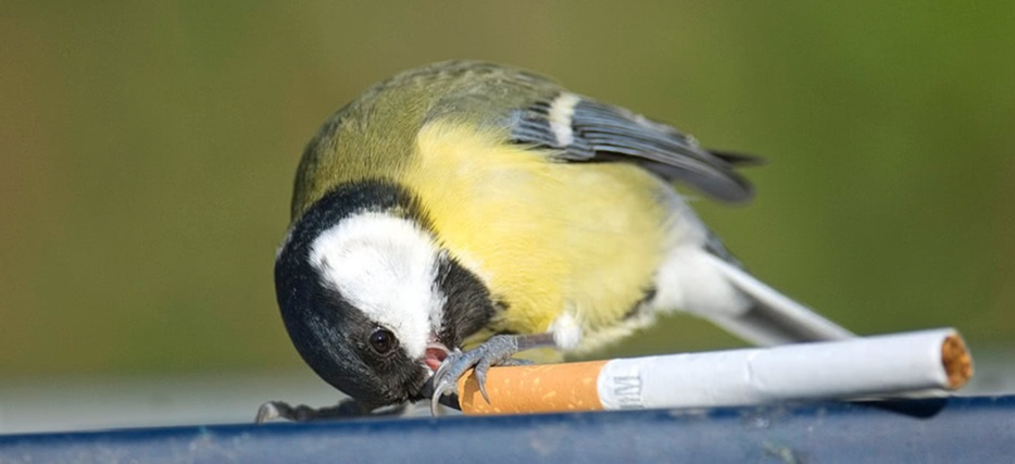 When he saw a seagull drinking water from a puddle filled with these monster toxins, the cigarette butts, and the harmful tobacco, he decided to set into action