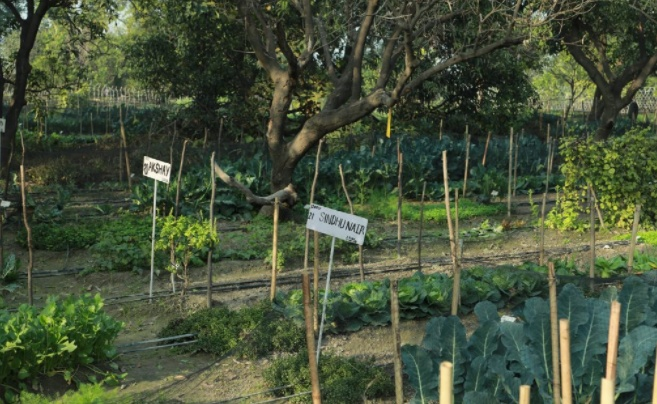 Edible routes will assist you in cultivating your veggies, economically and effectively inan organic manner