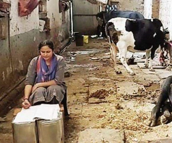 her study room wasthe cowshed and her study table was arranged in the corner of the cowshed with four empty oil cans