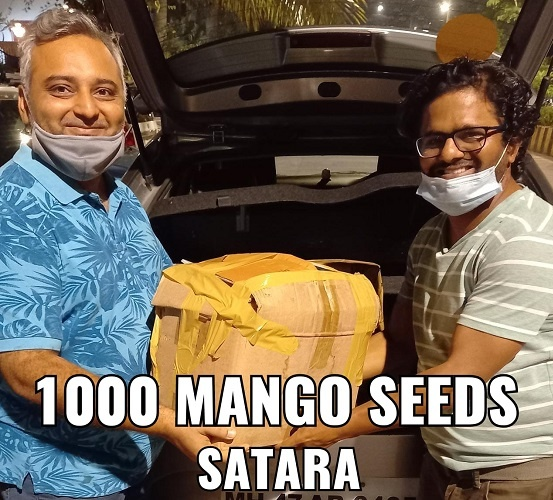 In 2020, his team collected and distributed 11,000 mango saplings