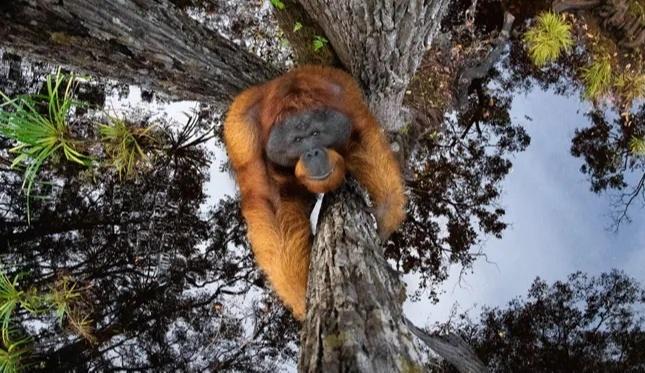 Thomas Vijayan, whose breathtaking photograph of an orangutan sticking to a tree won the photographer £1,500, for Nature TTL in 2021