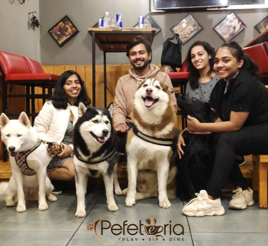 Pefeteria - a pet-friendly space where pets receive the respect they deserve